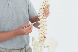 Doctor showing spine